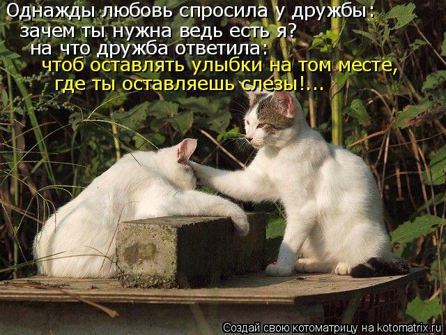 Котоматрица: Однажды любовь спросила у дружбы: зачем ты нужна ведь есть я? на что дружба ответила: чтоб оставлять улыбки на том месте, где ты оставляешь с