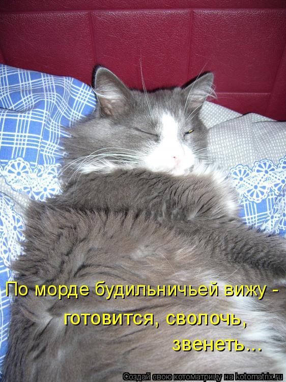 Котоматрица: По морде будильничьей вижу - готовится, сволочь,  звенеть...