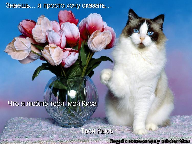 Картинки я люблю тебя мой кот