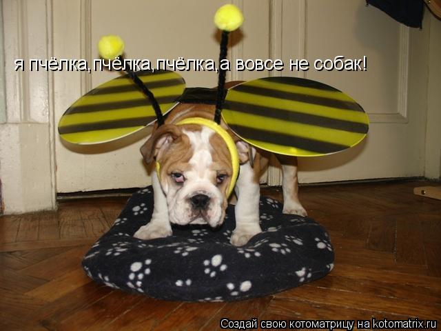 Котоматрица: я пчёлка,пчёлка,пчёлка,а вовсе не собак!