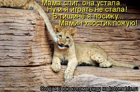 Котоматрица: Мама спит, она устала... Ну и я играть не стала! Мамин хвостик пожую!  В тишине я посижу...
