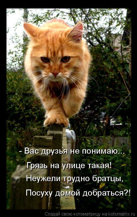 Котоматрица: Грязь на улице такая! Неужели трудно братцы, Посуху домой добраться?! - Вас друзья не понимаю...