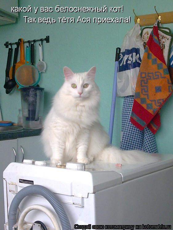 Котоматрица: какой у вас белоснежный кот! Так ведь тётя Ася приехала!