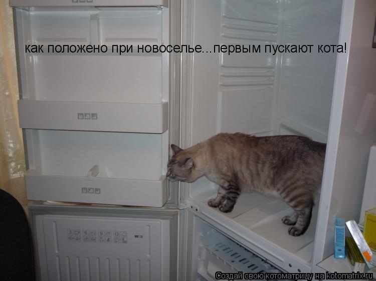 Котоматрица: как положено при новоселье...первым пускают кота!