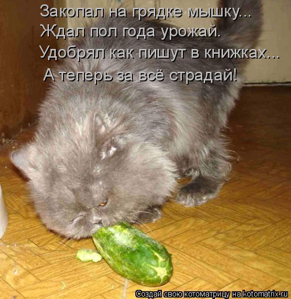 Котоматрица: Закопал на грядке мышку... Ждал пол года урожай. Удобрял как пишут в книжках... А теперь за всё страдай!