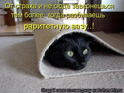 Котоматрица: От страха и не сюда завернешься тем более, когда разбиваешь раритетную вазу..!
