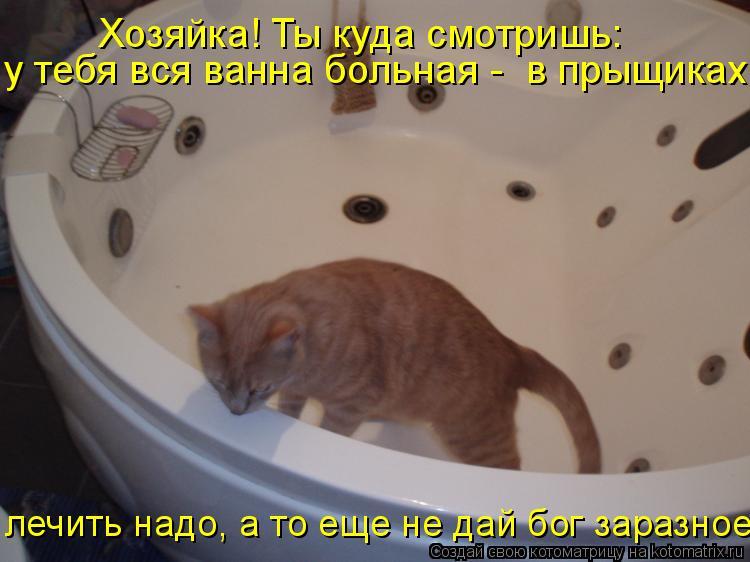 Котоматрица: Хозяйка! Ты куда смотришь: у тебя вся ванна больная -  в прыщиках! лечить надо, а то еще не дай бог заразное!!
