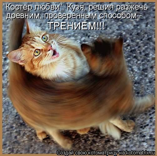 """Котоматрица: """"Костёр любви"""", Кузя, решил разжечь древним, проверенным способом - ТРЕНИЕМ!!!"""
