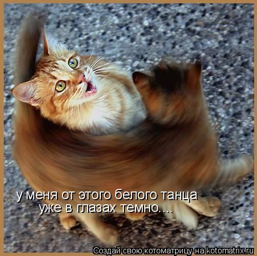 Котоматрица: у меня от этого белого танца  уже в глазах темно....