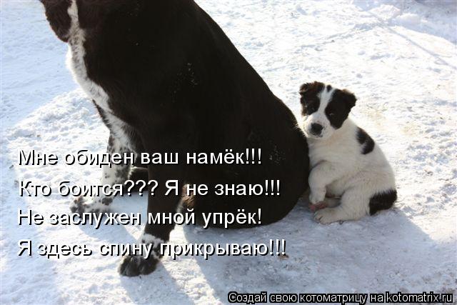 Котоматрица: Мне обиден ваш намёк!!! Кто боится??? Я не знаю!!! Не заслужен мной упрёк! Я здесь спину прикрываю!!!