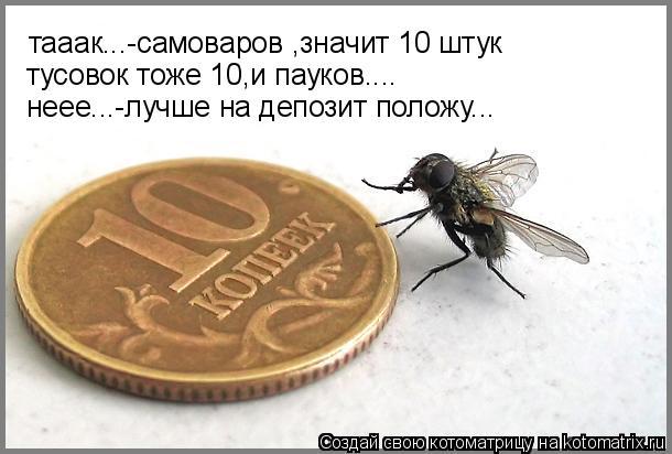 Котоматрица: тааак...-cамоваров ,значит 10 штук тусовок тоже 10,и пауков.... неее...-лучше на депозит положу...