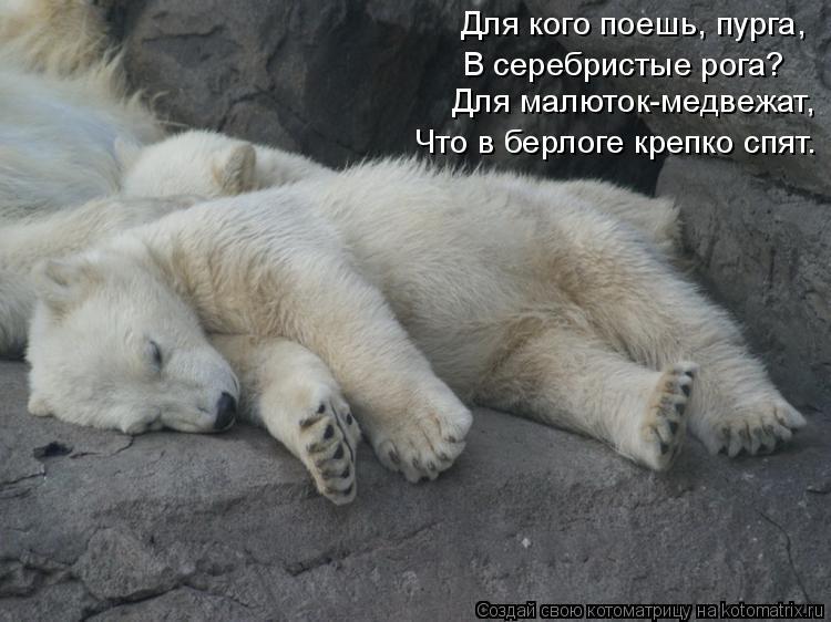Котоматрица: Для кого поешь, пурга, В серебристые рога? Для малюток-медвежат, Что в берлоге крепко спят.