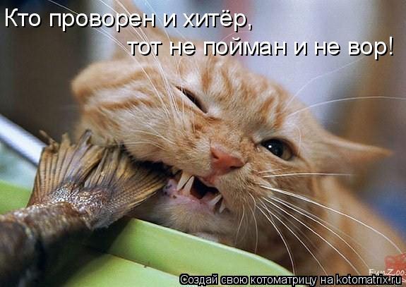 Котоматрица: Кто проворен и хитёр,  тот не пойман и не вор!