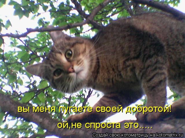 Котоматрица: вы меня пугаете своей добротой! ой,не спроста это.....