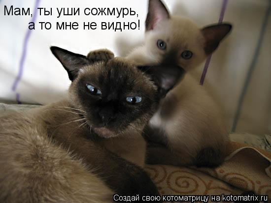 Котоматрица: Мам, ты уши сожмурь,  а то мне не видно!