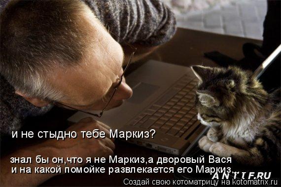 Котоматрица: и не стыдно тебе Маркиз? знал бы он,что я не Маркиз,а дворовый Вася и на какой помойке развлекается его Маркиз...