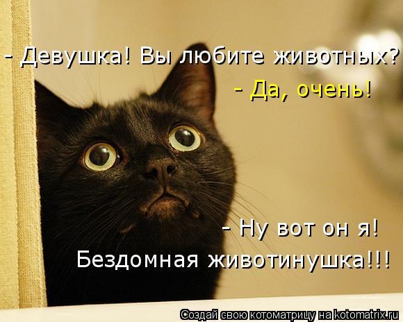 Котоматрица: - Девушка! Вы любите животных? - Да, очень! - Ну вот он я!  Бездомная животинушка!!!