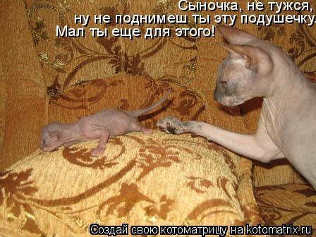 Котоматрица: Сыночка, не тужся,  ну не поднимеш ты эту подушечку. Мал ты еще для этого!