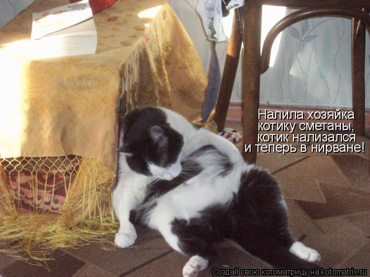 Котоматрица: Налила хозяйка котику сметаны, котик нализался и теперь в нирване!
