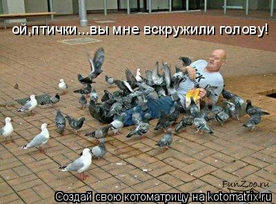 Котоматрица: ой,птички...вы мне вскружили голову!