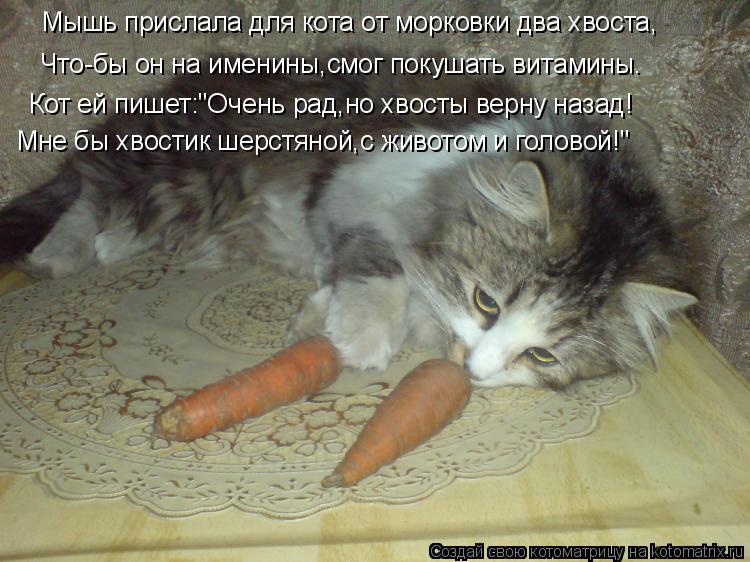 """Котоматрица: Мышь прислала для кота от морковки два хвоста, Что-бы он на именины,смог покушать витамины. Кот ей пишет:""""Очень рад,но хвосты верну назад! Мне"""