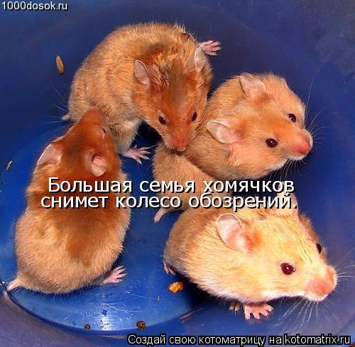 http://kotomatrix.ru/images/lolz/2009/02/17/b.jpg