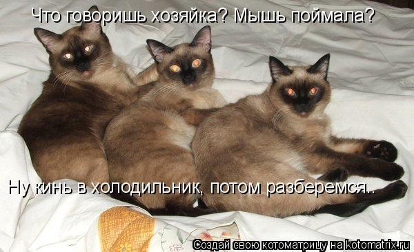 Котоматрица: Что говоришь хозяйка? Мышь поймала? Ну кинь в холодильник, потом разберемся..