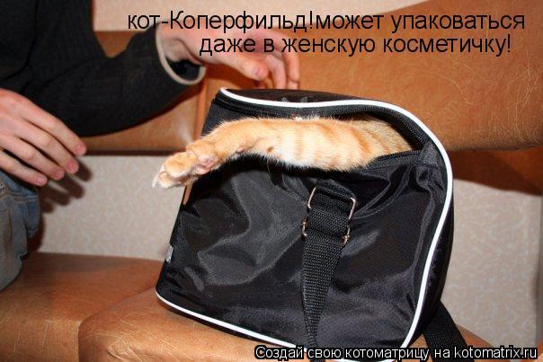 Котоматрица: кот-Коперфильд!может упаковаться даже в женскую косметичку!