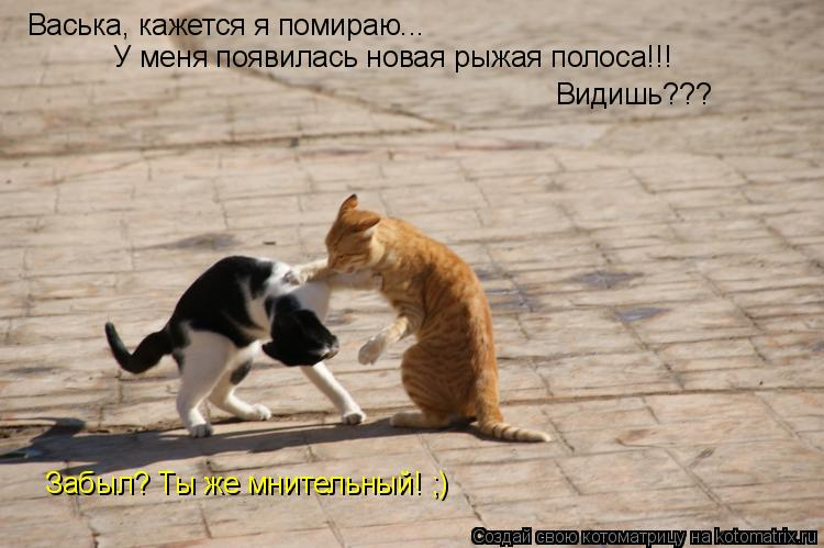 Котоматрица: Васька, кажется я помираю... У меня появилась новая рыжая полоса!!! Видишь??? Забыл? Ты же мнительный! ;)