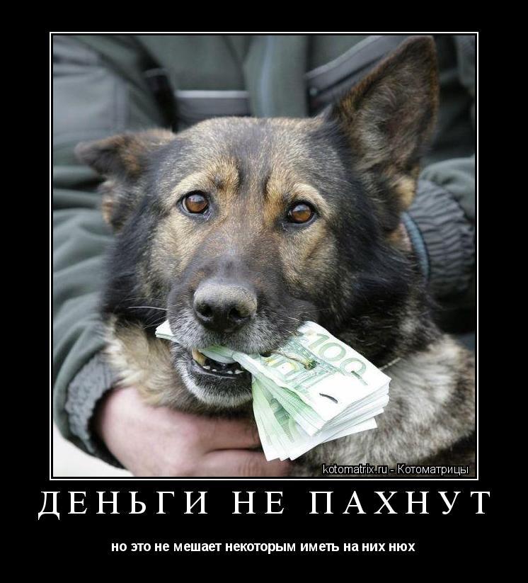Котоматрица: деньги не пахнут но это не мешает некоторым иметь на них нюх