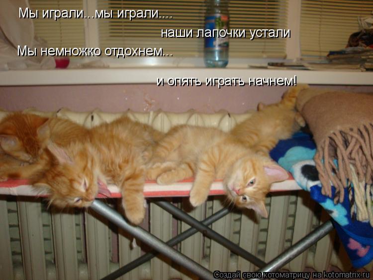 Котоматрица: Мы играли...мы играли.... наши лапочки устали Мы немножко отдохнем... и опять играть начнем!