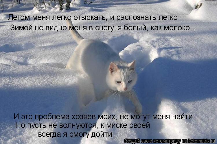 Котоматрица: Летом меня легко отыскать, и распознать легко Зимой не видно меня в снегу, я белый, как молоко... И это проблема хозяев моих, не могут меня най