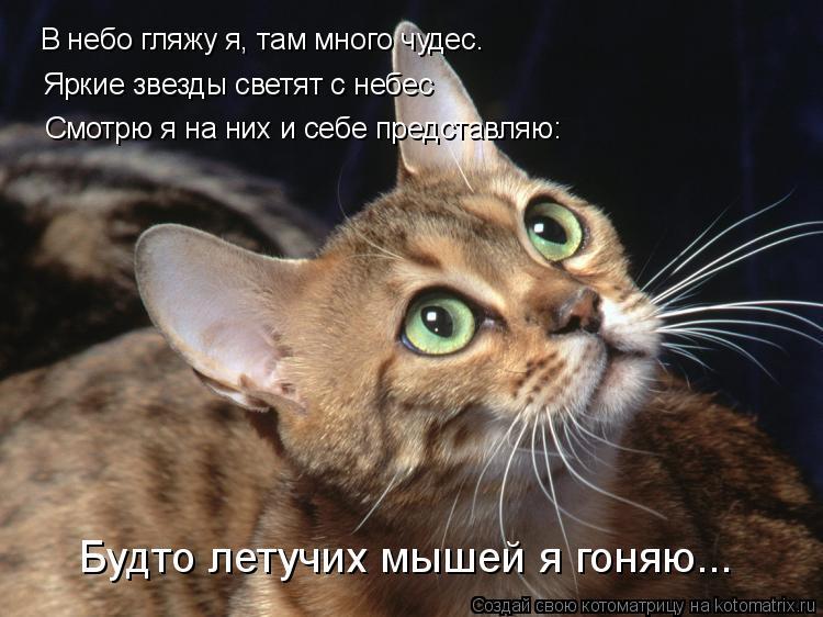 Котоматрица: В небо гляжу я, там много чудес… Яркие звезды светят с небес Смотрю я на них и себе представляю: Будто летучих мышей я гоняю...
