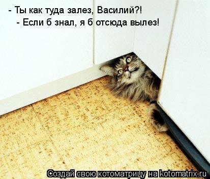 Котоматрица: - Ты как туда залез, Василий?! - Если б знал, я б отсюда вылез!