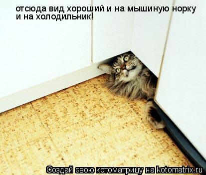 Котоматрица: отсюда вид хороший и на мышиную норку и на холодильник!