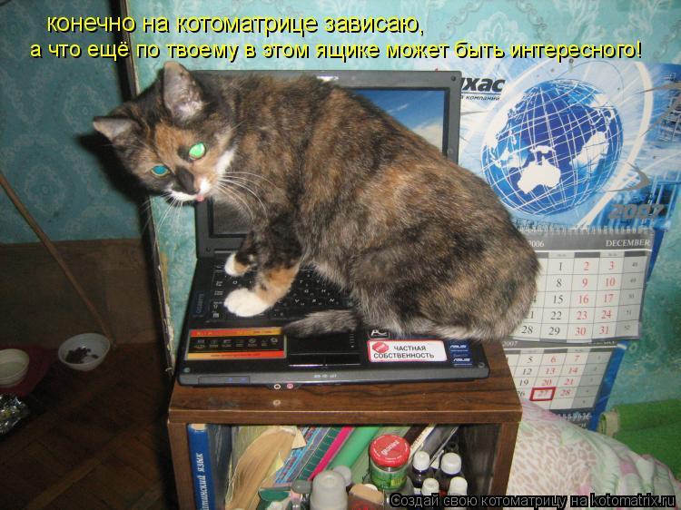 Котоматрица: конечно на котоматрице зависаю, а что ещё по твоему в этом ящике может быть интересного!