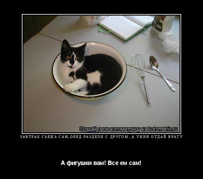 Котоматрица: Завтрак сьешь сам,обед раздели с другом ,а ужин отдай врагу А фигушки вам! Все ем сам!