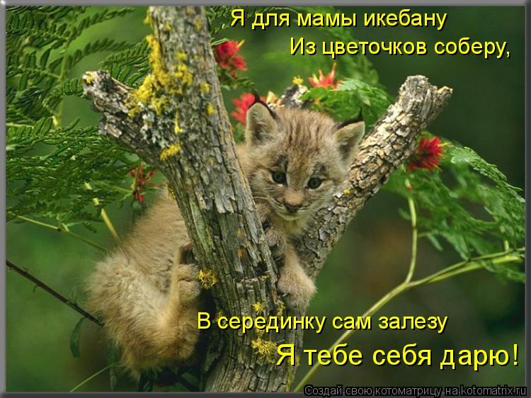 Котоматрица: Я для мамы икебану   Из цветочков соберу, В серединку сам залезу   Я тебе себя дарю!
