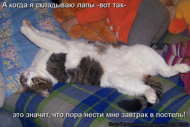 Котоматрица: А когда я складываю лапы -вот так-  это значит, что пора нести мне завтрак в постель!