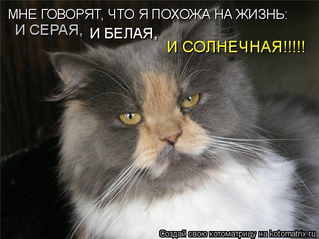 Котоматрица: МНЕ ГОВОРЯТ, ЧТО Я ПОХОЖА НА ЖИЗНЬ: И СЕРАЯ, И БЕЛАЯ, И СОЛНЕЧНАЯ!!!!!