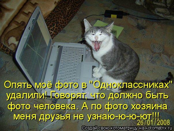 """Котоматрица: Опять моё фото в """"Одноклассниках""""  удалили! Говорят, что должно быть  фото человека. А по фото хозяина  меня друзья не узнаю-ю-ю-ют!!!"""