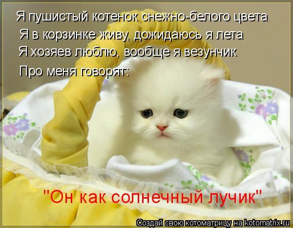 """Котоматрица: Я пушистый котенок снежно-белого цвета Я в корзинке живу, дожидаюсь я лета Я хозяев люблю, вообще я везунчик Про меня говорят: """"Он как солнеч"""