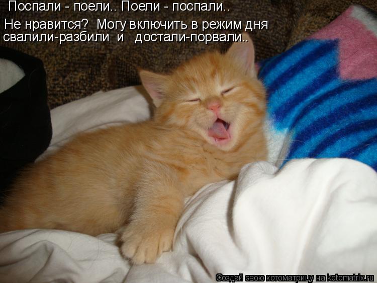 Котоматрица: Не нравится?  Могу включить в режим дня Поспали - поели.. Поели - поспали.. свалили-разбили  и   достали-порвали..