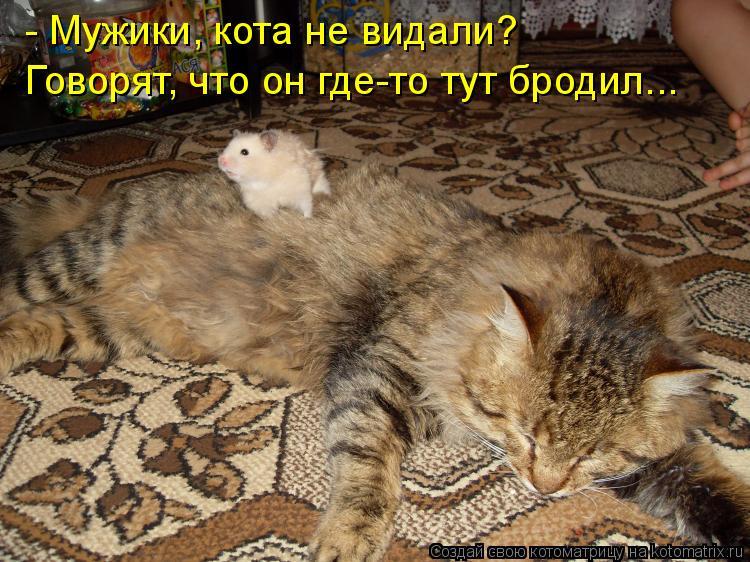 Котоматрица: - Мужики, кота не видали?  Говорят, что он где-то тут бродил...