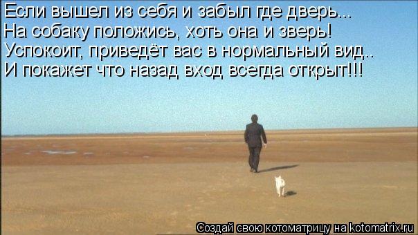 Котоматрица: Если вышел из себя и забыл где дверь... На собаку положись, хоть она и зверь! Успокоит, приведёт вас в нормальный вид.. И покажет что назад вход
