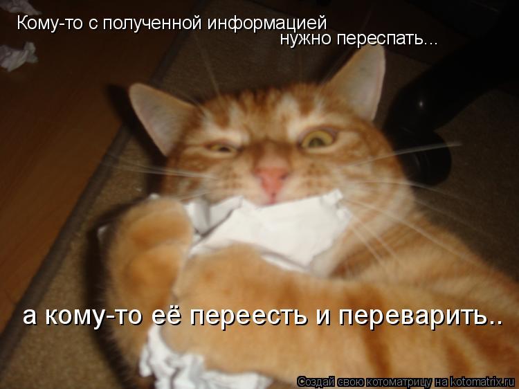 Котоматрица: Кому-то с полученной информацией нужно переспать... а кому-то её переесть и переварить..