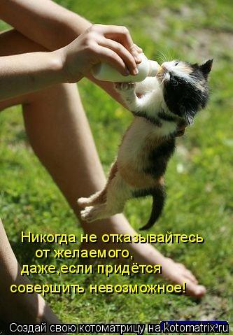 Котоматрица: Никогда не отказывайтесь от желаемого, даже,если придётся совершить невозможное!