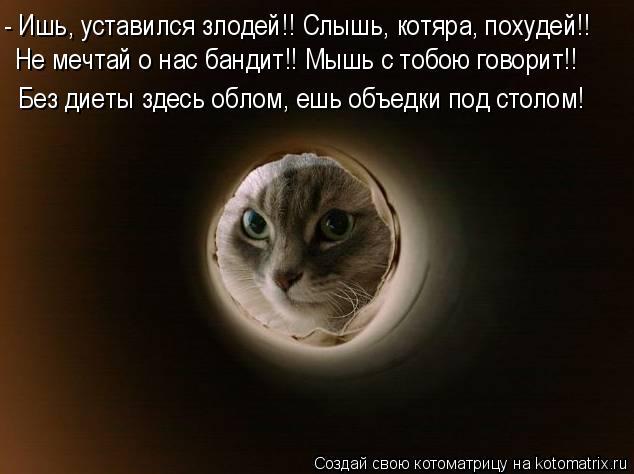Котоматрица: - Ишь, уставился злодей!! Слышь, котяра, похудей!! Не мечтай о нас бандит!! Мышь с тобою говорит!! Без диеты здесь облом, ешь объедки под столом!