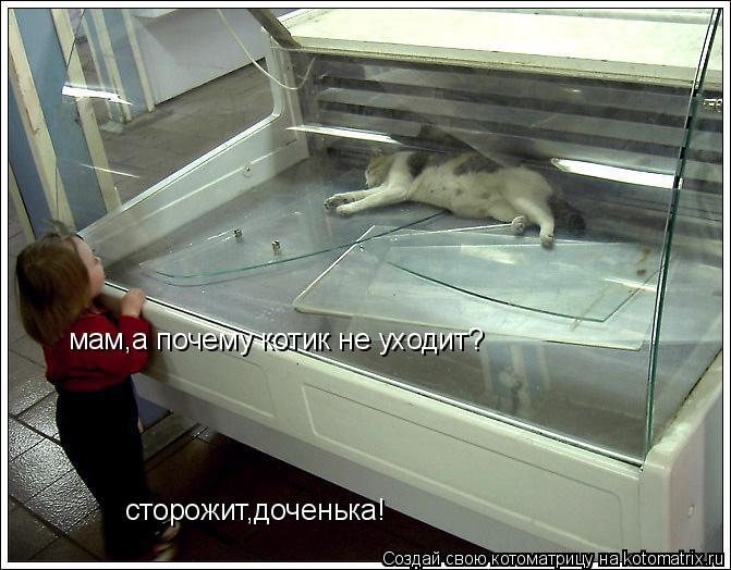 Котоматрица: мам,а почему котик не уходит? сторожит,доченька!