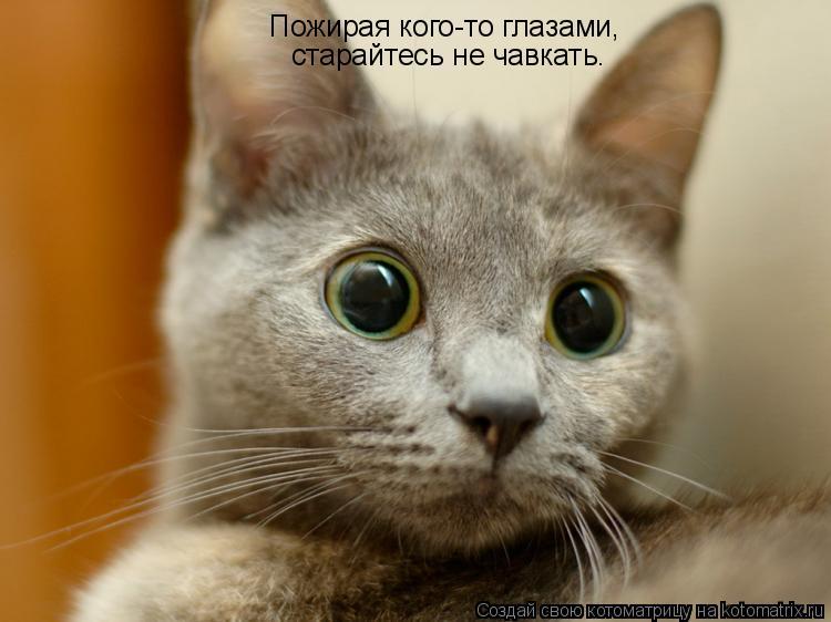 Котоматрица: Пожирая кого-то глазами, старайтесь не чавкать.
